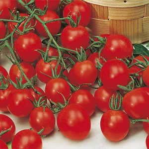 Vrtnarstvo Breskvar - Solanum lycopersicum Strillo F1