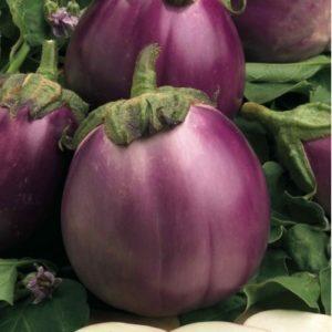 Vrtnarstvo Breskvar - Solanum melongena Beatrice F1