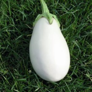 Vrtnarstvo Breskvar - Solanum melongena Clara F1