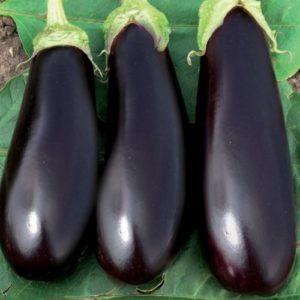 Vrtnarstvo Breskvar - Solanum melongena Epic F1