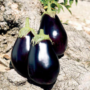 Vrtnarstvo Breskvar - Solanum melongena Galine F1