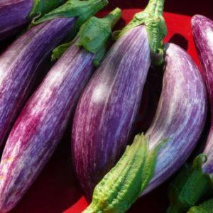 Vrtnarstvo Breskvar - Solanum melongena Rania F1