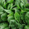 Vrtnarstvo Breskvar - Spinacia oleracea Clipper F1