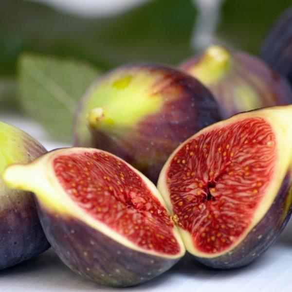 Ficus carica 'Brown Turkey' plod - Vrtnarstvo Breskvar